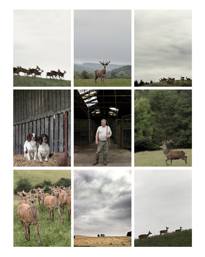 venison farming photographs